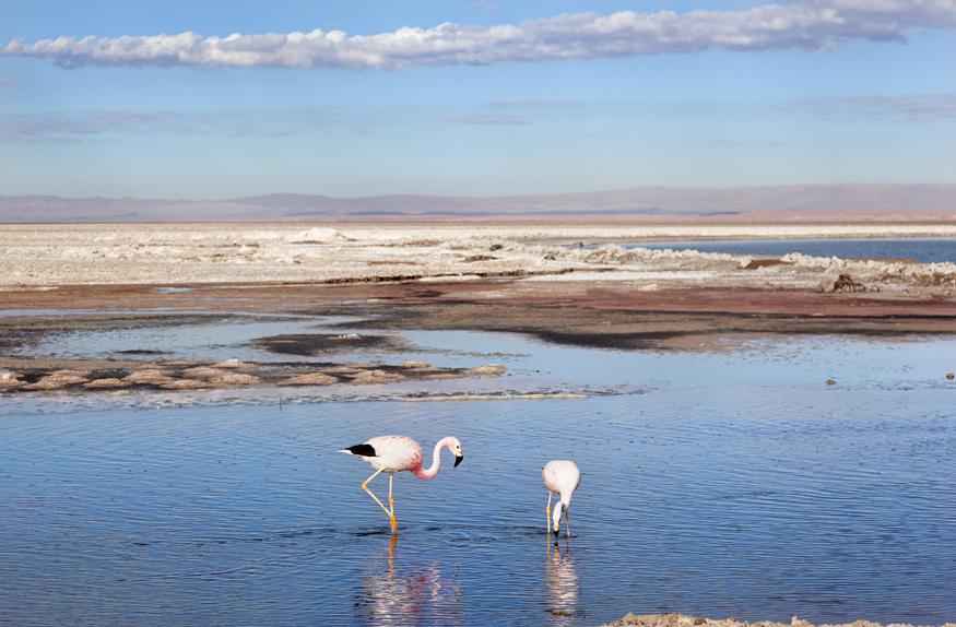 Salar de Atacama com Flamingos