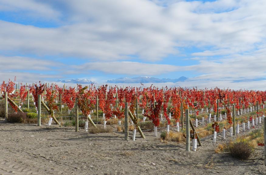 Vinhedos no outono, Mendoza